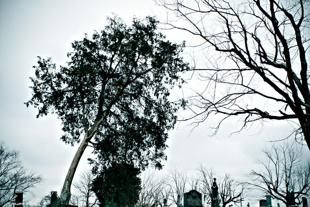 Get Bent Mister Tree