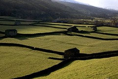 Ubiquitous meadow barns - Swaledale