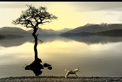 Running Around....... (Nicolas Valentin) Tags: winter dog mountain reflection tree nature freedom scotland canine lochlomond anseladams huskie  ilovethistree vosplusbellesphotos oheck ilovehusky iloveanseltoo