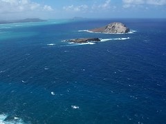 Turtle Head (hubris) Tags: hawaii waikiki honolulu hanaumabay