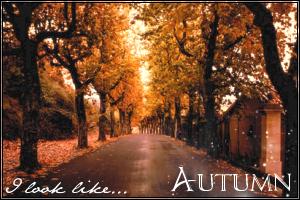 autumnmirror