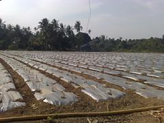 N952350 (Future Portfolio Agro) Tags: stan ladang wakaf