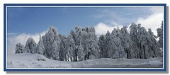 panoramic landscape (Polis Poliviou) Tags: morning blue trees winter sky white mountain snow cold tree nature beautiful weather pine clouds forest canon wonderful landscape eos frozen photo flickr frost skiing cyprus pines snowboard february olympos snowglobe polis troodos nicosia naturesfinest supershot specland excellentscenic mediterraneanpines mediterraneanpine poliviou polispoliviou cypruspine troodospine