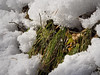Snow melting (rotraud_71) Tags: sun snow droplets spring oldgrass