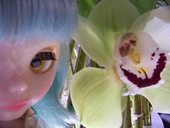 Orchid Eyes