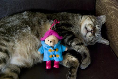 帕克睡很大