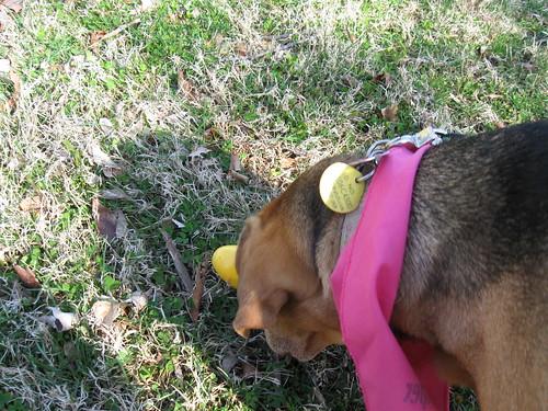 Doggie Easter Egg Hunt