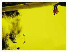 RED SHIRT IN SUMMERS (EXPLORED) (DEVENDRA PAL) Tags: click doubledragon kaleidoscopicvision goldseal perfectclick heartaward fotografiadigitalnaturalmente paololivorno phot