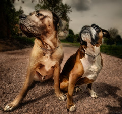 Local bouncers (Stevacek) Tags: dog dogs wideangle honza d300 sigma1020mm staremisto