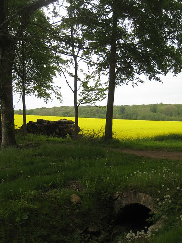 Colza / Rapeseed, French Countryside