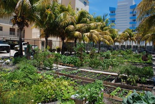 south beach community garden