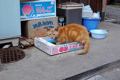 Today's Cat@20090518
