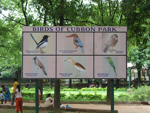 Birds of Cubben Park