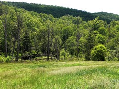 Open Fields- North Mills (Magellan67) Tags: scenic mtb pisgahnationalforest northmillsriver