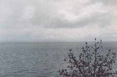 lake vnern (sweden) (k_mera) Tags: 2003 lake tree water clouds grey sweden north scan sverige vnern endless