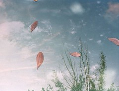 And this is summer (little femur) Tags: summer sky reflection tree leaves clouds doubleexposure happyaccidents srt minoltasrt102 minoltasrt303