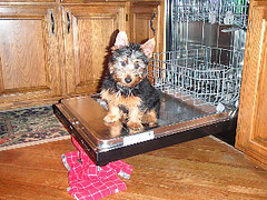 Teddy updated! Word of advice...DO NOT wash your Terrier in the dishwasher :^)
