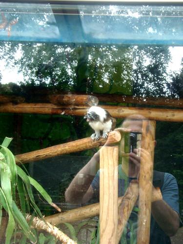 autoportret cu lemur