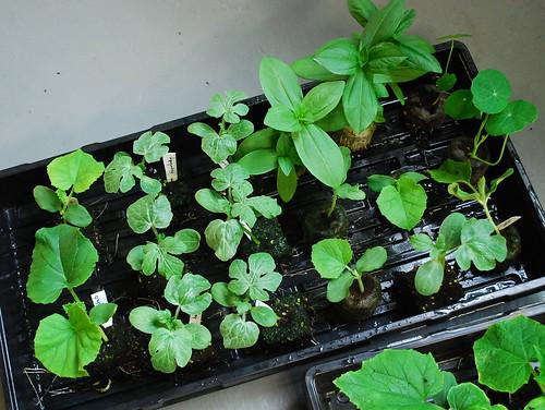 warm season plants 1