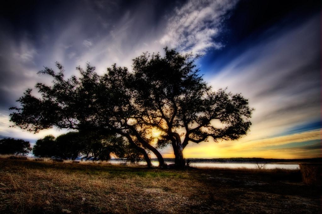 A tree in San Marcos, TX.