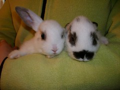 Robbies Rabbits (proudnamvet........Patriot Guard Riders) Tags: bunnies project robyn rabbits westville petsoklahoma
