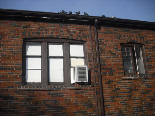 pidgeons on the roof