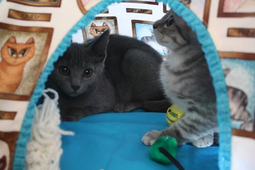 Cozy and Ben 011