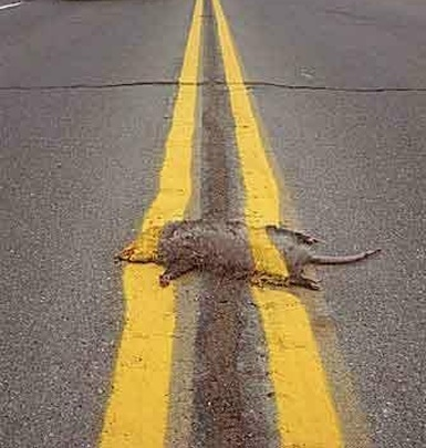TxDOT Plays Possum