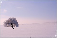 Kar;  (Exp) (g  L  L e) Tags: winter snow tree alone explore lonely kar aa k yalnzlk sadelik bibana