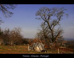 Tronco - Chaves - Portugal (Fer.Ribeiro) Tags: portugal tronco trsosmontes chavesrural