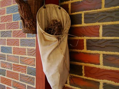 C.Wren Nest 3-4-09