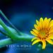 Mini Sunflower by Pisces Romance