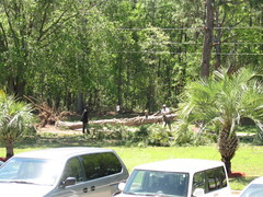 Big Tree down in front
