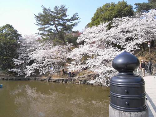 09-04-06【桜】@浮見堂(奈良公園)-02