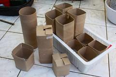 Toilet Paper Roll Pots (joeysplanting) Tags: pots toiletpaperrolls