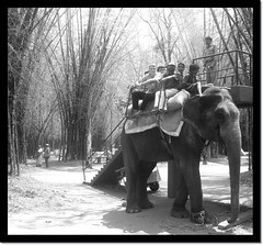 Elephant Rider (Re Image) Tags: blackandwhite india elephant animal award frame rider thebest watcher blueribbonwinner goldenmix abigfave anawesomeshot aplusphoto diamondclassphotographer flickrdiamond wonderfulworldmix theperfectphotographer karnadaka goldstaraward thebestshot vosplusbellesphotos mallmixstaraward naturephotographs perfectphotographer photosmiles dragonsdanger