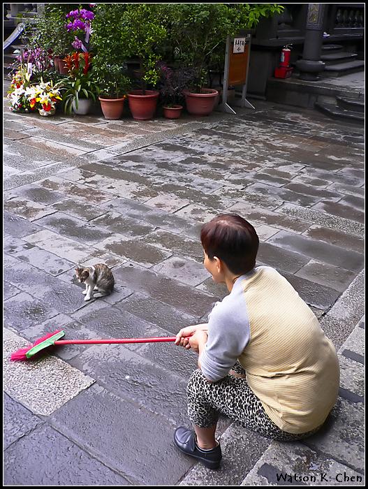 20090414-龍山寺貓貓-12.jpg