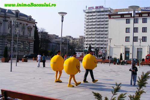 www.inimaBacaului.ro Bulinele Poza zilei