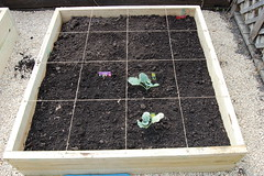 My first square foot garden.