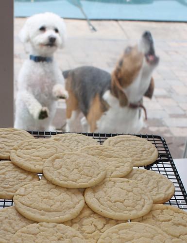 Danny cookies Brady barking
