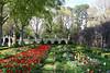 Tulip garden, Williamsburg (John H Bowman) Tags: virginia williamsburg colonialwilliamsburg gardens cwgardens governorspalacegardens flowers tulips springblossoms fencesgates april2009 april 2009 canon241054l explore