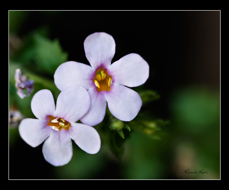 small-flower