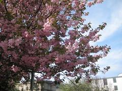 Le jardin d'Amélie en fleurs