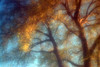 """DSLR - zone sieve """"impressionist"""""""