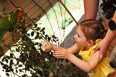 Spilling Nectar (K.Holt) Tags: birds kids fun zoo nikon play exhibit exotic animalplanet lorikeets d90