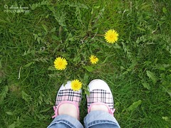 55/365. Head over heals. (olivia house) Tags: pink flowers portrait people woman plants selfportrait canada flower cute green art love feet me nature girl beautiful beauty grass yellow portraits newfoundland outside outdoors person spring model women shoes pretty photoshoot olivia artistic gorgeous perspective creative young may adorable sneakers flats teen portraiture teenager 365 selfphoto 2009 dandelions project365 sooc headoverheals 55365 oliviahouse