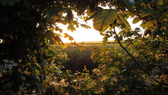 DSC01766 (edwardsgt) Tags: countryside tring hedgerow