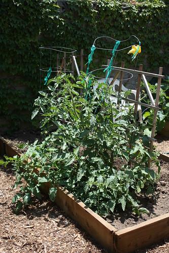 Garden progress May 003.JPG