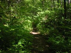 60 - Little East Fork Trail 2