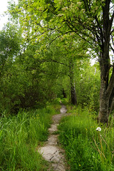 trailsoftlight (Micael Carlsson) Tags: wood summer green nature blog fotograf sweden natur trail karlstad sverige kil hammar brllop vrmland arvika deje torsby portrtt sunne hagfors skoghall hemsida forshaga livsstil knappstad miccar kristinhamn wwwmicaelcarlssonse wwwmiccarse